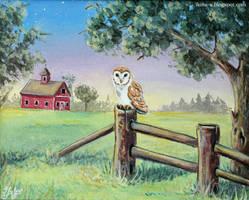 Barn owl by Ilona-S