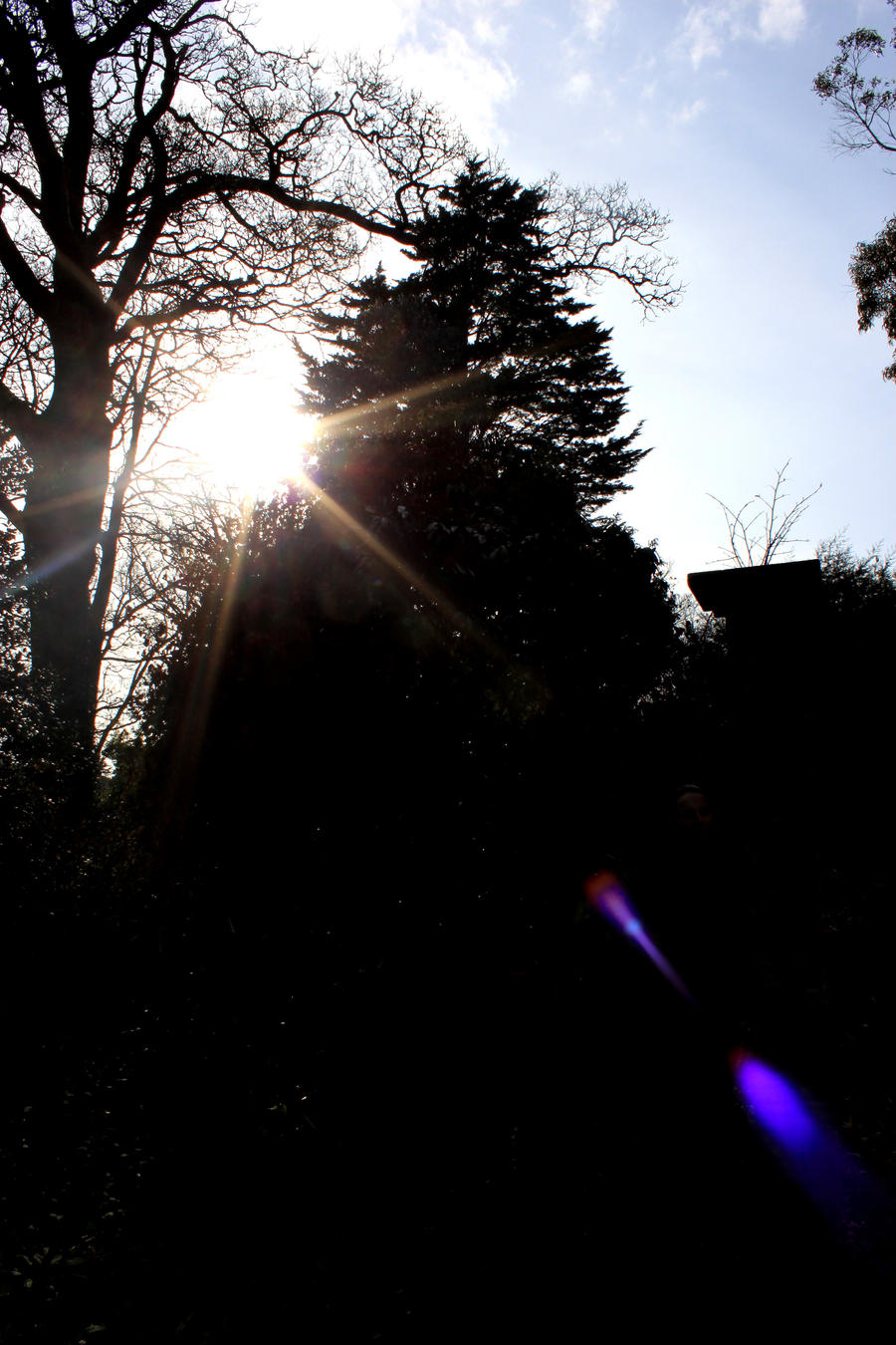 Sun shining through the trees by Living-Life-Loud