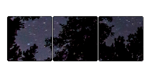 F2U Starry Forest Divider
