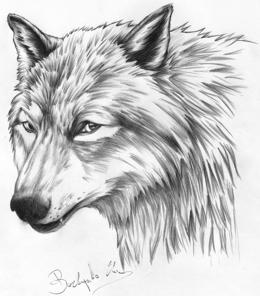 Jacob Wolf By Elia88 On DeviantArt