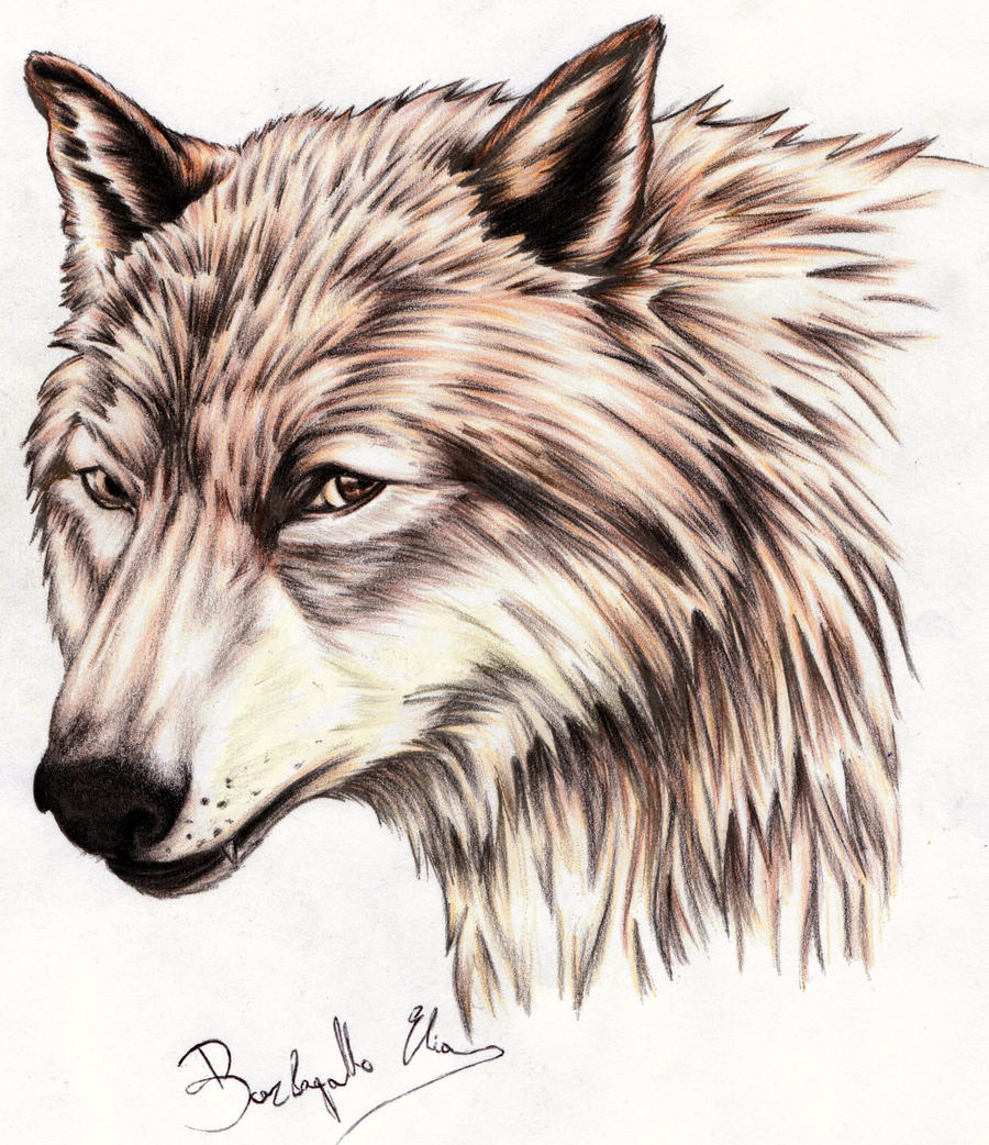 how to draw a black wolf