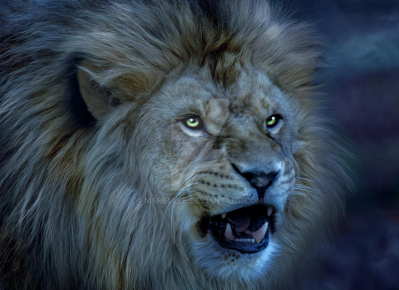 Roar by mshellee