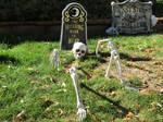 Skeleton Grave Stock