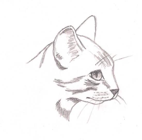 Cat Sketch by Calvalier