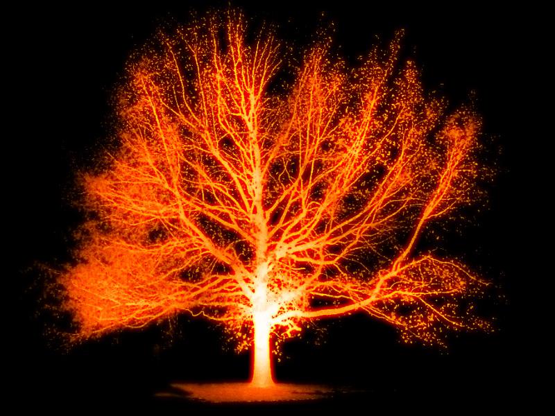 trees on fire essay Essay on forests in hindi अर्थात इस article में आप पढेंगे,  essay on trees in hindi – वृक्षों एवं.