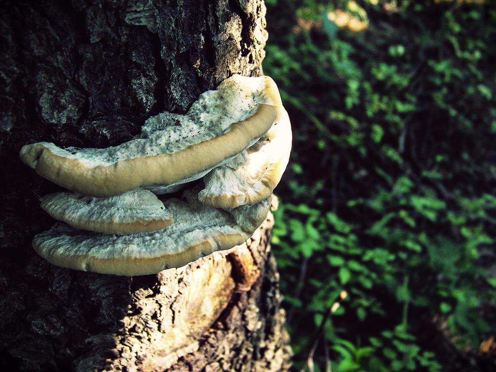 Fungi II by CleverSleazoidXD