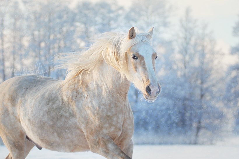Winter winds by attlid