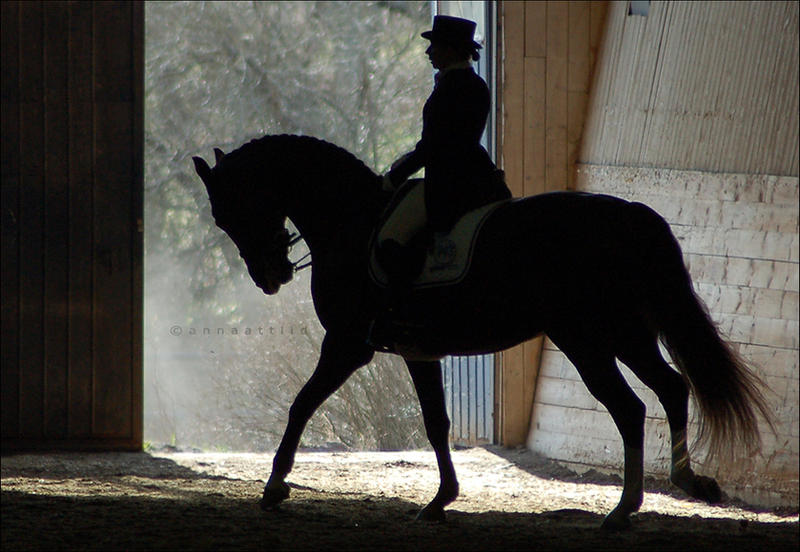 Silhouette of a horse by attlid