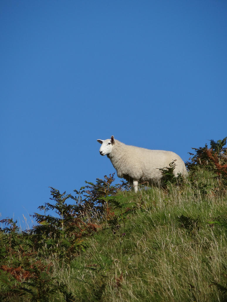 Sheep and sky by Corycat