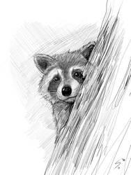 Raccoon Portrait by Temiree
