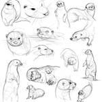Otter Studies (June 2013)