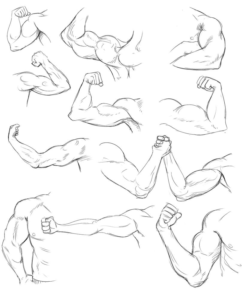 Line Drawing Tutorial : Arm life drawing practice by temiree on deviantart