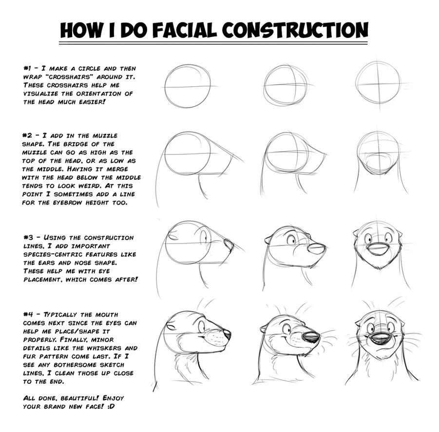 Facial Construction 30