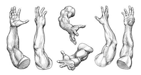 Arm Studies (Male)