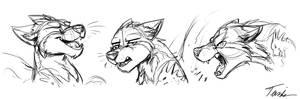 Commission: Tiger09716