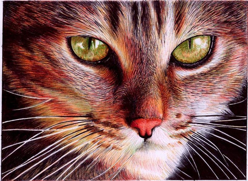 Cat face - Bic ballpoint pen