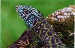 Water Lizard - Bic Ballpoint Pen