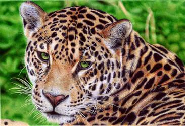 Jaguar - Ballpoint Pen by VianaArts