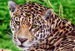 Jaguar - Ballpoint Pen