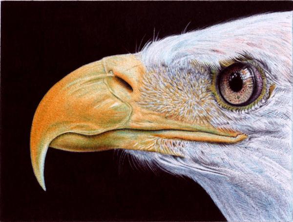 Bald Eagle - Ballpoint Pen
