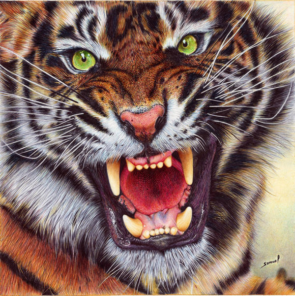 Angry Tiger - Ballpoint Pen by VianaArts on DeviantArt