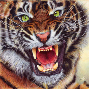 Angry Tiger - Ballpoint Pen