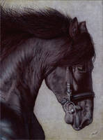 Horse Head - Ballpoint Pen by VianaArts
