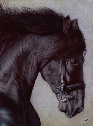 Horse Head - Ballpoint Pen