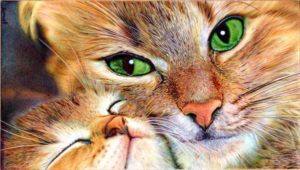 Mother cat and Kitten - Ballpoint Pen