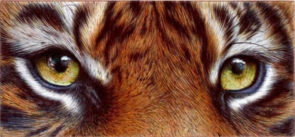 Tiger Eyes - Ballpoint Pen by VianaArts