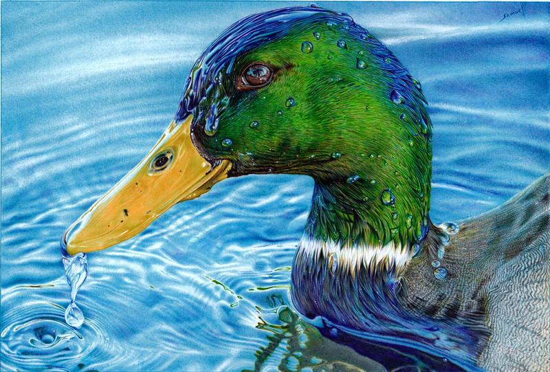 Mallard Duck - Ballpoint Pen by VianaArts on DeviantArt