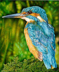 KingFisher - Ballpoint Pen