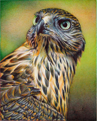 Young Hawk - Ballpoint Pen by VianaArts