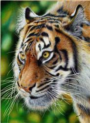 Glancing Tiger - Ballpoint Pen by VianaArts