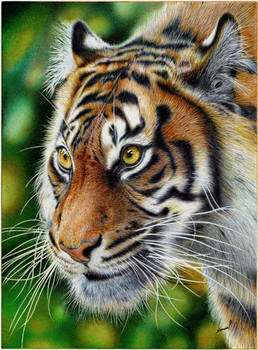 Glancing Tiger - Ballpoint Pen