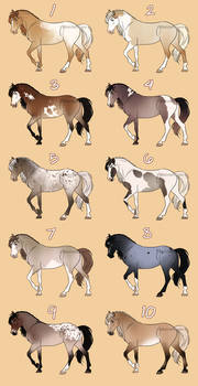 Spring 2019 Equine Adopts [2/10]