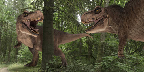 Tyrannosaurus Rex starting a duel in the forest