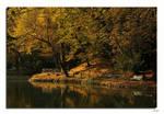 Autumn in the park Monza