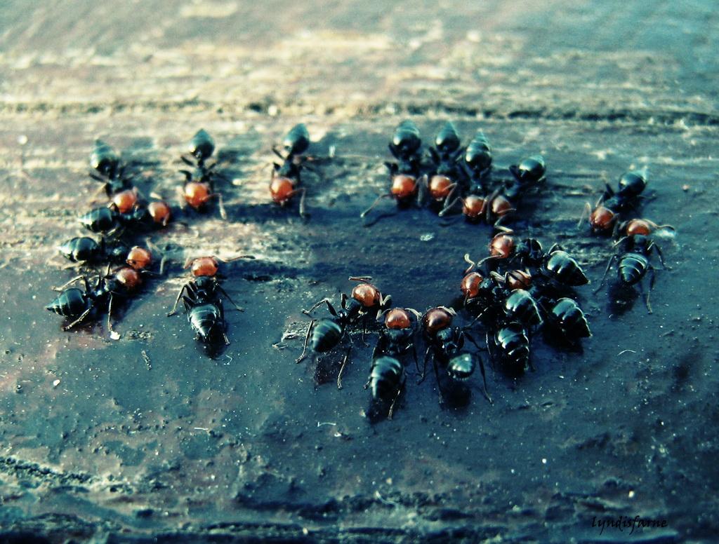 ants by lyndisfarne