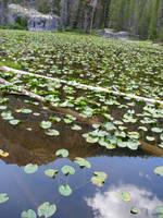 lily pond by LadyEru