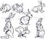 Animal Studies . Rabbits