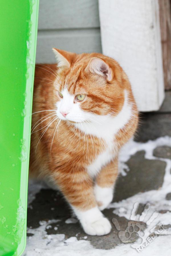 Garfield by Chila-Sahara