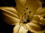 Little Flowerlet