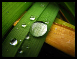 Drops by nakkimakkara