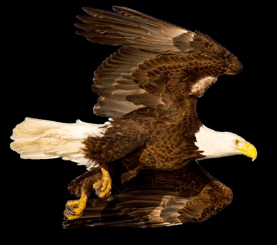 Flying eagle png