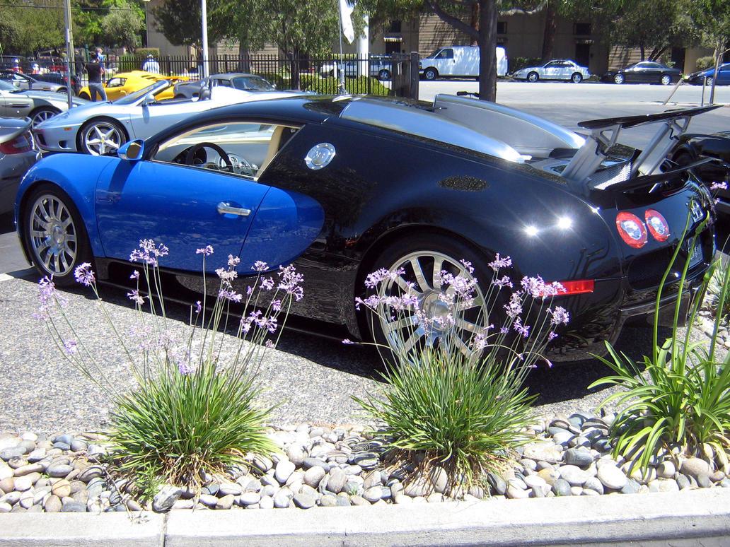 blue bugatti veyron los gatos by partywave on deviantart. Black Bedroom Furniture Sets. Home Design Ideas