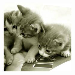 Committee by KittenPride