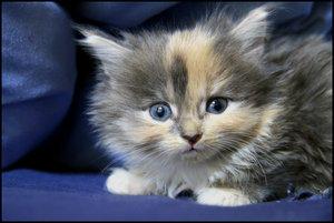 Look Into My Eyes By Prussian by KittenPride