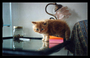My little kitties - 6 by KittenPride