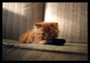 My little kitties - 2 by KittenPride